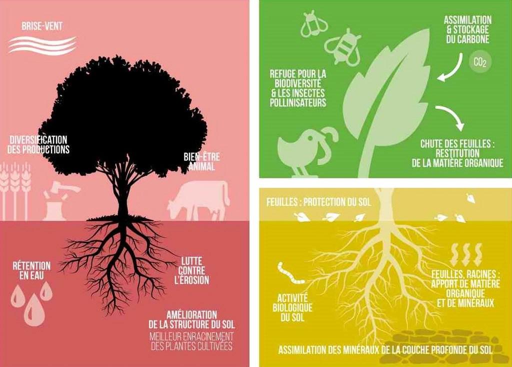 Les Bienfaits De Dame Natureou Services écosystémiques