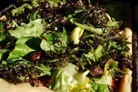 jeune salade trevise
